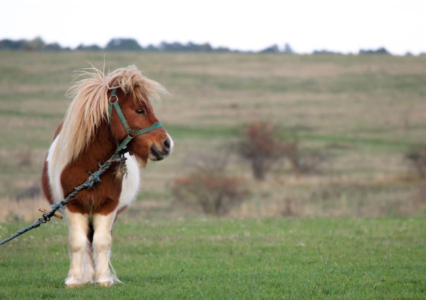 Dubbelpunt - pony in de weide